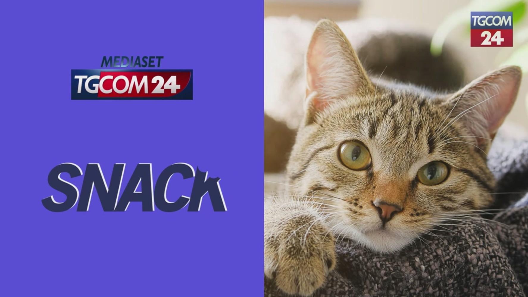 giornata-nazionale-del-gatto,-ecco-i-felini-piu-famosi