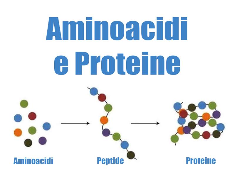 aminoacidi:-sono-9-quelli-che-non-possono-mancare-nella-tua-dieta-quotidiana!-ecco-quali-sono!