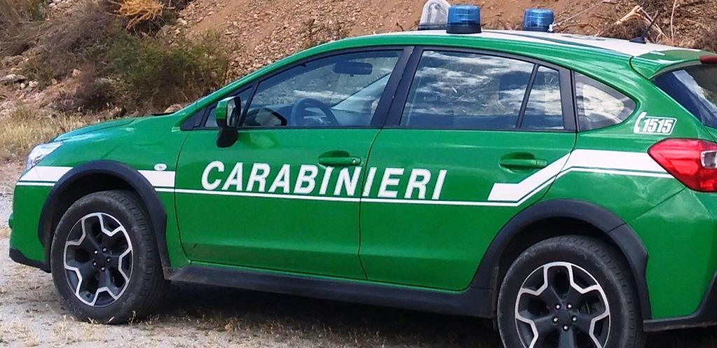 controlli-canapa-sativa:-convenzione-tra-il-comando-regione-carabinieri-forestale-ed-il-dipartimento-di-agraria-dell'universita-di-reggio-calabria