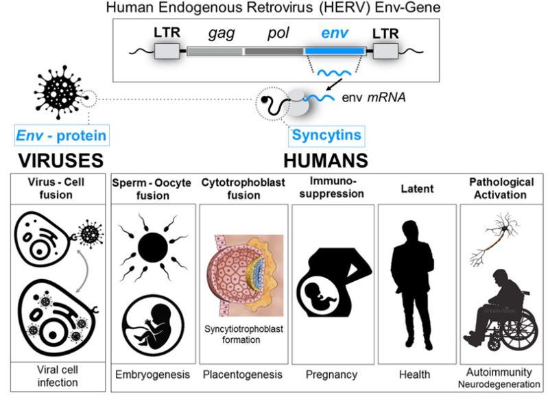 perche-i-vaccini-covid-19-potrebbero-influire-sulla-fertilita