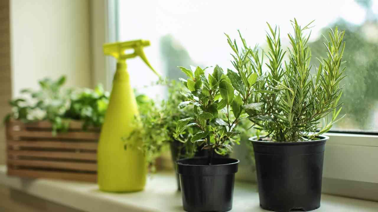 Proteggi a costo zero le piante di casa con gli antiparassitari naturali fai da te