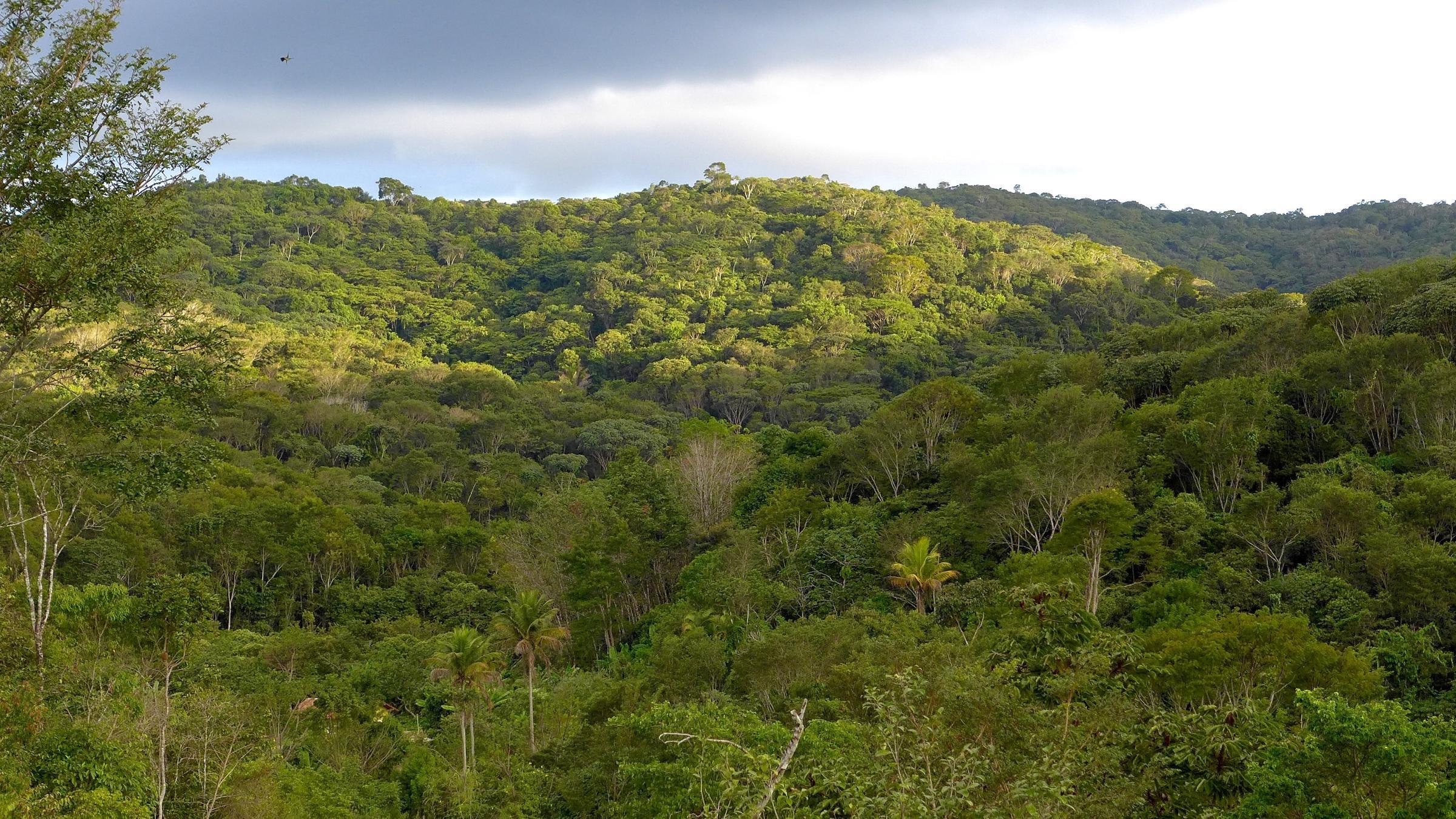la-mappa-delle-foreste-del-mondo-che-tornano-a-crescere