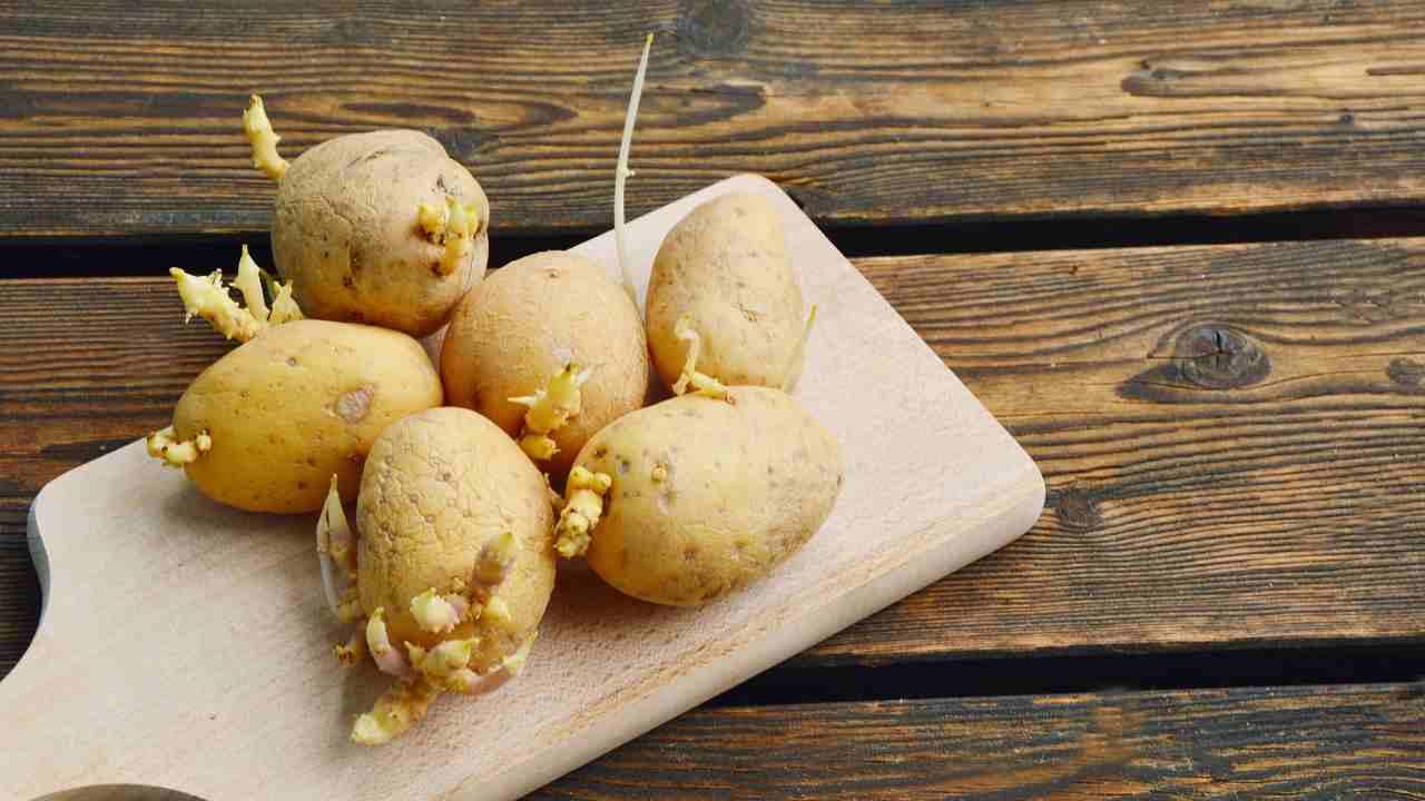 se-non-vuoi-ritrovarti-con-le-patate-germogliate,-ecco-gli-errori-che-devi-evitare