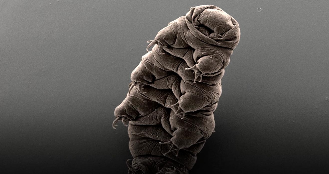 perche-la-nasa-sta-portando-i-tardigradi-nello-spazio?