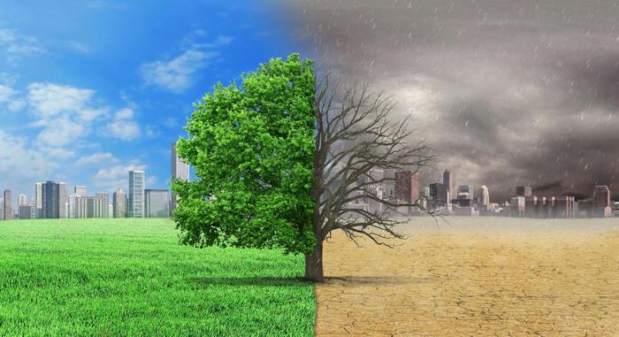 onu,-giornata-mondiale-dell'ambiente:-quest'anno-e-dedicata-al-ripristino-degli-ecosistemi.