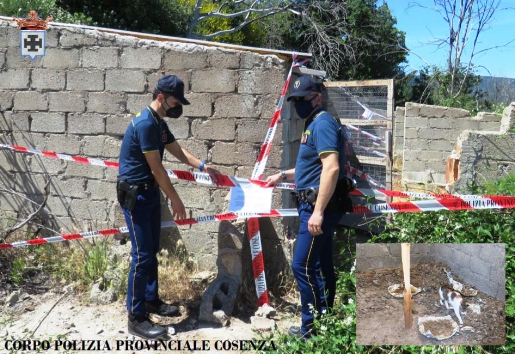 polizia-provinciale-in-azione-in-sila:-sequestrati-numerosi-gatti-e-il-fabbricato-dove-erano-detenuti-in-condizioni-incompatibili