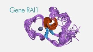 """fondazione-just-italia-sostiene-la-ricerca-e-dona-300mila-euro-alla-fondazione-per-la-ricerca-biomedica-avanzata-vimm-di-padova-per-il-progetto-sul-ruolo-del-""""gene-rai1""""-nelle-patologie-del-neurosviluppo-infantile"""
